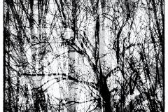 erdő_mélyén